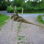 Dragonfly 2008
