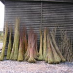 Fresh Cut Willow 2010
