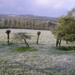 Our Field in the Frost 2008